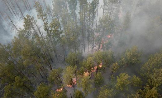 Brand im Tschernobyl-Wald - Foto: Europäische Weltraumorganisation (ESA) - Lizenz: gemeinfrei